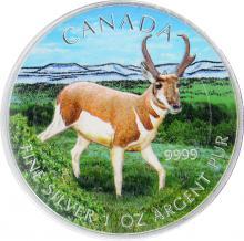 Stříbrná mince kolorovaná Antilopa Canadian Wildlife 1 Oz 2013 Štandard
