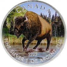 Stříbrná mince kolorovaný Bizon lesní Canadian Wildlife 1 Oz 2013 Standard