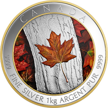 Stříbrná kolorovaná mince 1 Kg Maple Leaf Forever 2016 Proof (.9999)