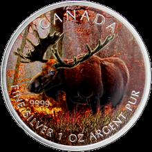 Stříbrná mince kolorovaný Los Canadian Wildlife 1 Oz 2012 Štandard